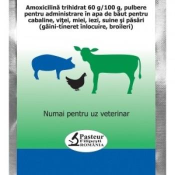 Amoxicilina FP 60% (10g)