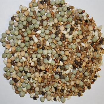 Spinne Tineret (fara porumb)