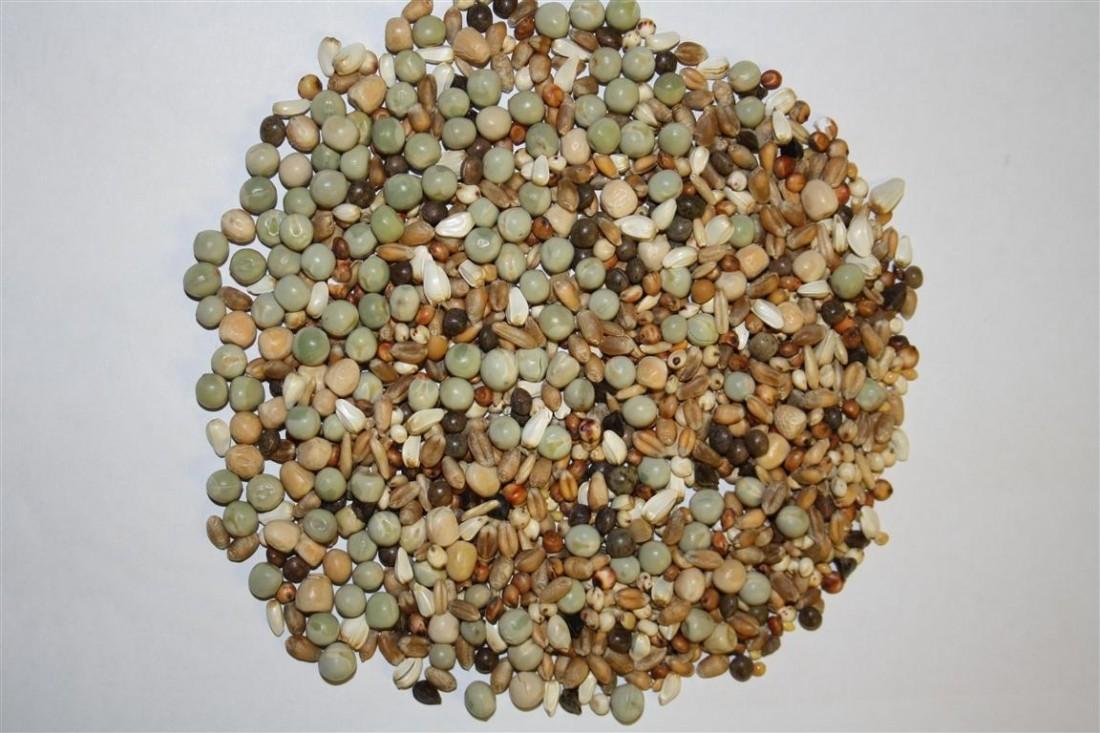 Spinne Tineret fara porumb (25kg)
