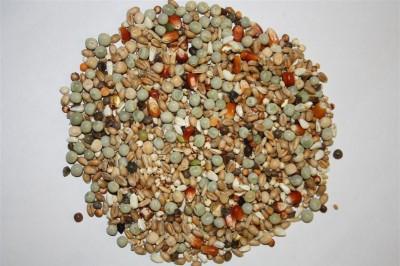 Spinne Tineret cu porumb (25kg)