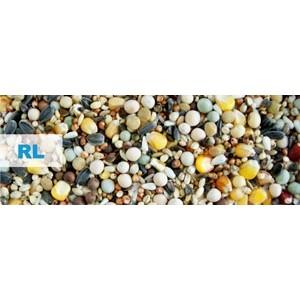 Kampol RL Reproductie- si Zbor(fara grau)